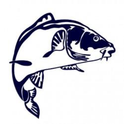 Nálepka na auto pro rybáře- kapr- rybaření